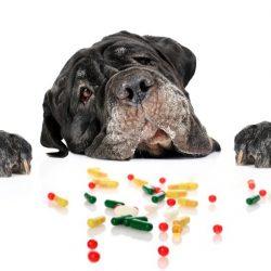 Dog Medicines & Healthcare