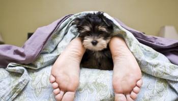 Dog Hygiene & Behaviour